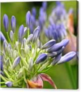 Montana Purple And Blue Canvas Print