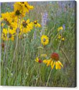 Montana Wildflowers Canvas Print