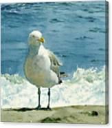 Montauk Gull Canvas Print