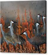 Monte Vista Sandhill Cranes Canvas Print