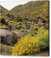 Montezuma Rd Daisey Garden Canvas Print