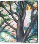 Monticello Tree Canvas Print