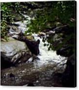Montreat Creek North Carolina Canvas Print