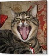 Monty's Yawn Canvas Print