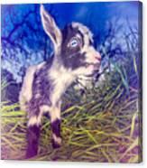 Moo Cow Love Grass Canvas Print