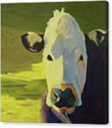 Moo To You Canvas Print