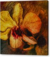 Mood Of The Orchid Canvas Print