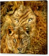 Moods Of Africa - Lions 2 Canvas Print