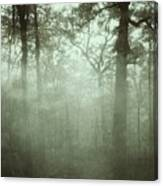 Moody Foggy Forest Canvas Print