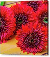 Moody Red Gerbera Dasies Canvas Print
