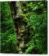 Moody Tree In Forest Canvas Print