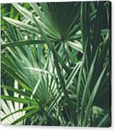 Moody Tropical Leaves Canvas Print
