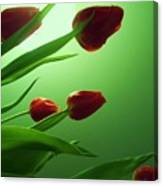Moon  And Tulips Canvas Print