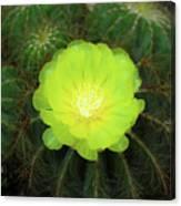 Moon Cactus Canvas Print