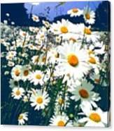 Moon Daisies Canvas Print