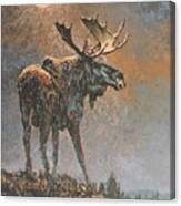 Moon Dusted Moose Canvas Print
