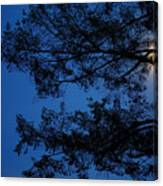 Moon Hiding In The Tree Canvas Print