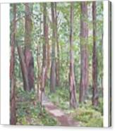 Moon Lake Pathway Canvas Print