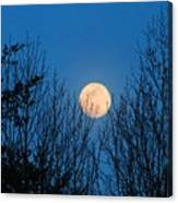 Moon Rising In The Trees Canvas Print