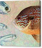 Mooneyes, Sunfish Canvas Print