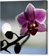 Moonlight And Orchid Canvas Print