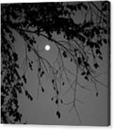 Moonlight - B And W Canvas Print