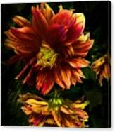 Moonlight Dahlia Canvas Print