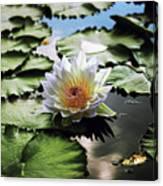 Moonlight Lily  Canvas Print