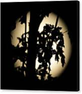 Moonlit Leaves No 1 Canvas Print