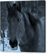 Moonlit Stallion Canvas Print