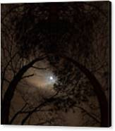 Moonshine 14 The Trees Canvas Print