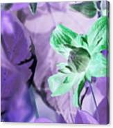 Moonwalk Clematis Canvas Print