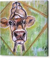 Moooo Canvas Print