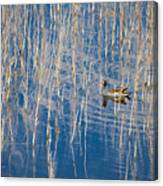 Moorhen In The Reeds Canvas Print