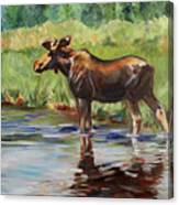 Moose At Henry's Fork Canvas Print