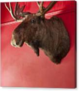 Moose Head Mounted On A Wall. Canvas Print