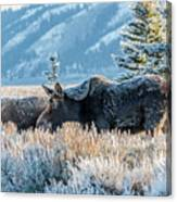 Moose In Cold Winter Ice Canvas Print