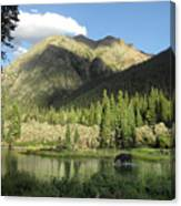 Moose In The Elk Creek Beaver Ponds Canvas Print