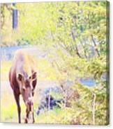 Moose In The Yard Canvas Print