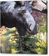Moose In Vail Canvas Print