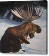 Moose In Winter Canvas Print