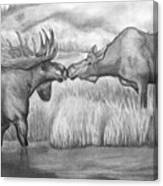 Moose Looking For Love Canvas Print