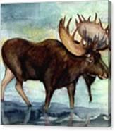 Moose Reflections Canvas Print