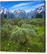 Moran Meadows Canvas Print