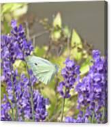 More Lavender Love Canvas Print
