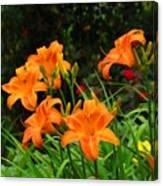 More Orange Daylilies Canvas Print