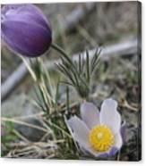 More Purple Flowers Canvas Print