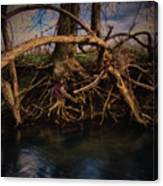 More Roots In Creek Canvas Print