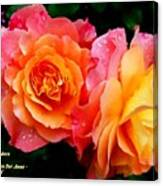 More Roses For Anne Catus 1 No. 1 H A Canvas Print