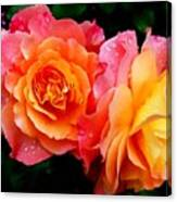 More Roses For Anne Catus 1 No. 1 H B Canvas Print